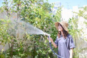 名古屋の水やり